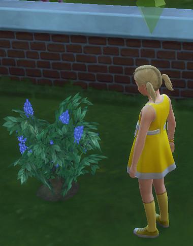 Sims4_01_002_00912